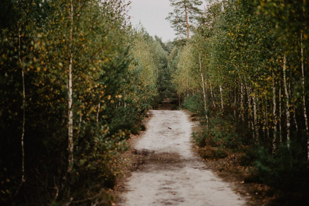 droga leśna antonin